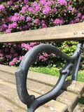 Garden flower roses in a city park with bench Royalty Free Stock Photos