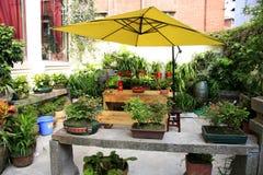 Garden. Flower tea table chair Royalty Free Stock Photo