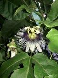 Garden flower stock photos