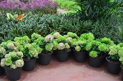 Garden flower4 Stock Images