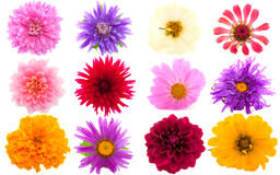 Free Garden Flowers Royalty Free Stock Image - 10564026