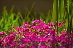 Garden flowers. Grass, plants and flowers in a garden Stock Photos