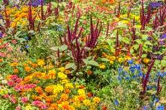Garden flowers. Flowers on Hamilton gardens, New Zealand royalty free stock photo
