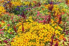 Garden flowers. Flowers on Hamilton gardens, New Zealand stock photos