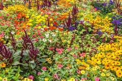 Garden flowers. Flowers at Hamilton gardens, New Zealand Stock Photography