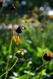 Garden flowers. Some garden flower in the sunbeam Stock Images