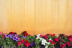 Garden flowers. In front of yellow wall - lots of space for text Royalty Free Stock Image