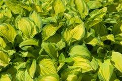 Garden flowers Stock Images