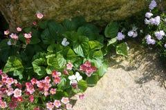 Garden flowers Stock Photos