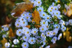 Garden flowers in autumn royalty free stock photography