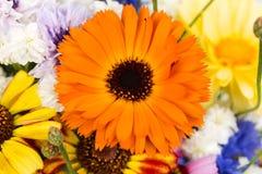 Garden flowers, background Stock Image