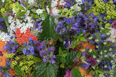 Garden flowers background Royalty Free Stock Images