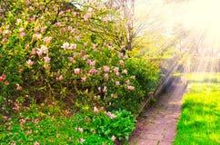 Garden. Flowers Background make in Wisley Garden stock photography