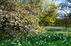 Garden. Flowers Background make in Wisley Garden stock image