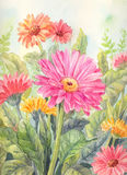 Garden flowers background in watercolor. Gerberas illustration  Royalty Free Stock Photo