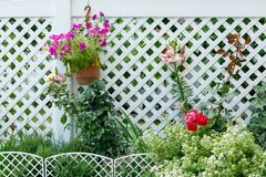Garden flowers on the background of white plastic fencing in the cottage village royalty free stock photo