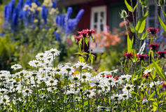 Garden flowers, backyard of summer cottage Royalty Free Stock Photo