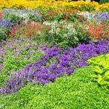 garden flowers Royalty Free Stock Image