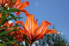 Garden flowers. Stock Images