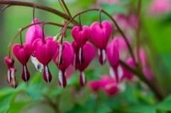 Garden flowers. Stock Photos