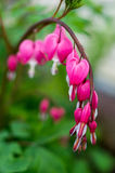 Garden flowers. Royalty Free Stock Images