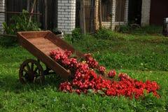 Garden flowers. Royalty Free Stock Photo