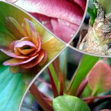 Garden  flowers in bloom macro collage Royalty Free Stock Photography