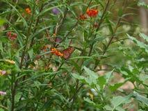 Garden Flowers with Butterflies Stock Photo