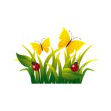 Garden flowers and butterflies. Vector illustration design Stock Photography