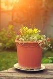 Garden flowers in a ceramic pot Stock Photos