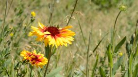 Garden flowers stock footage