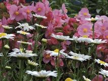 Garden Flowers Closeup Royalty Free Stock Photography