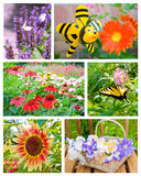 Garden flowers collage. Royalty Free Stock Photography