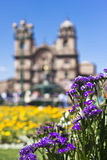 Garden flowers in Cuzco, Peru. Garden Flowers in front of the Companhia de Jesus Church in Cuzco, Peru Royalty Free Stock Images