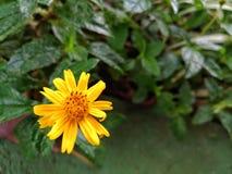 Garden with flowers, Details of garden, green, spring, joy of flowers. Stock Photos