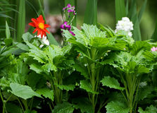 Garden flowers of different kinds. Royalty Free Stock Photography