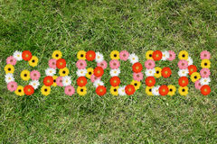 Garden from flowers flower spring meadow grass nature Stock Images