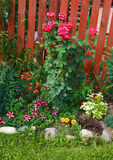 Garden flowers, flowerbed Royalty Free Stock Images
