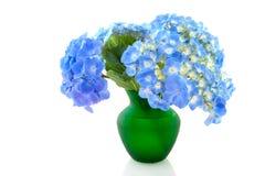 Garden flowers Hydrangea Royalty Free Stock Photo