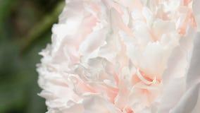 Garden flowers stock video footage