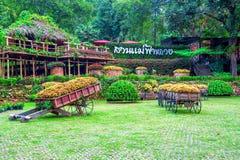 Garden flowers, Mae fah luang garden locate on Doi Tung. Garden flowers, Mae fah luang garden locate on Doi Tung in Chiang Rai,Thailand Stock Photo