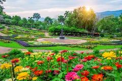 Garden flowers, Mae fah luang garden locate on Doi Tung. Garden flowers, Mae fah luang garden locate on Doi Tung in Chiang Rai,Thailand Royalty Free Stock Photo