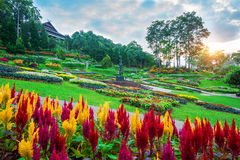 Garden flowers, Mae fah luang garden locate on Doi Tung. Garden flowers, Mae fah luang garden locate on Doi Tung in Chiang Rai,Thailand Stock Image