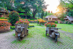 Garden flowers, Mae fah luang garden locate on Doi Tung in thailand. Garden flowers, Mae fah luang garden locate on Doi Tung in Chiang Rai,Thailand Royalty Free Stock Image