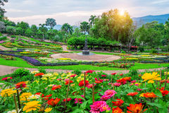 Garden flowers, Mae fah luang garden locate on Doi Tung in thailand. Garden flowers, Mae fah luang garden locate on Doi Tung in Chiang Rai,Thailand Stock Photo