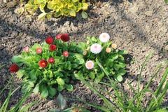 Garden flowers. Nice colored garden flowers Stock Image