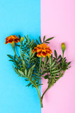 Garden flowers of orange color on bright pastel background Royalty Free Stock Images