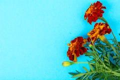 Garden flowers of orange color on bright pastel background Stock Photo