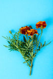 Garden flowers of orange color on bright pastel background Royalty Free Stock Photo