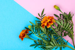 Garden flowers of orange color on bright pastel background Stock Photography